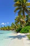 Карибский пляж с пальмами, кристаллической водой и белым песком Стоковые Изображения