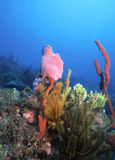 карибский риф Стоковое Изображение RF