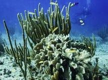 Карибский риф Стоковые Фотографии RF