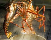 2 карибских омара готового быть кипеть Стоковые Фотографии RF