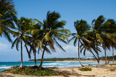 карибское сновидение стоковая фотография