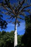 карибско Стоковая Фотография