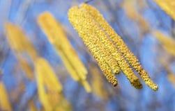 Карие цветки - весна, концепция цветня Стоковое Изображение RF