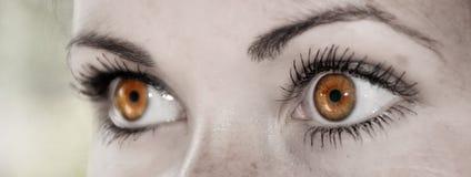 Карий глаз - красивейший, женственно стоковое изображение rf