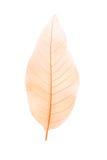 Каркасные листья Стоковое фото RF