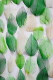 Каркасные листья Стоковая Фотография