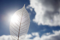Каркасные лист Стоковое Фото