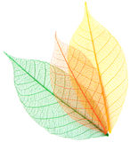 Каркасные листья Стоковые Изображения RF