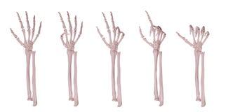 Каркасные руки подсчитывая 1-5 Стоковое Изображение