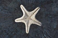 каркасные starfish Стоковое Изображение