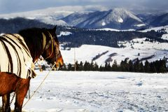 Карпаты в западной Украине стоковые фото