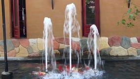 Карп плавает в пруде с фонтаном акции видеоматериалы