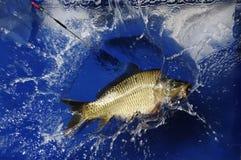 Карп рыбной ловли спорта стоковая фотография rf