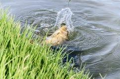 Карп рыбной ловли Стоковые Фото