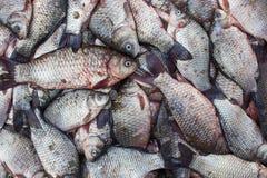 Карп рыб crucian, предпосылка еды Стоковое Изображение