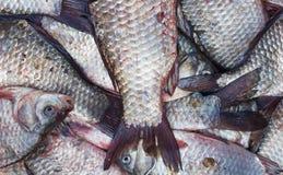 Карп рыб crucian, предпосылка еды Стоковое фото RF