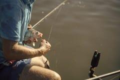 Карп, crucian карп, форель на рыболовном крючке, двигая под углом Стоковая Фотография