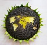 Карта мира сделанная от всего солнцецвета Стоковые Фото