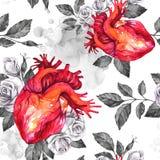 Картина акварели безшовная, анатомические сердца с эскизами роз и листья в винтажном средневековом стиле красный цвет поднял Стоковые Изображения