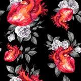 Картина акварели безшовная, анатомические сердца с эскизами роз и листья в винтажном средневековом стиле красный цвет поднял Стоковая Фотография