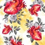 Картина акварели безшовная, анатомические сердца с эскизами роз и листья в винтажном средневековом стиле красный цвет поднял Стоковое Изображение RF