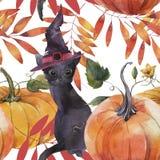 Картина акварели безшовная Иллюстрация с тыквами, черным котом и листьями осени бесплатная иллюстрация
