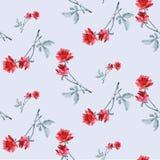 Картина акварели безшовная с красными розами и серым цветом выходит на свет - голубую предпосылку Стоковое Фото