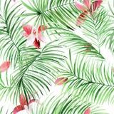 Картина акварели безшовная с листьями ладони и тропическими цветками иллюстрация штока