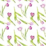 Картина акварели безшовная с розовыми тюльпанами Стоковые Изображения RF