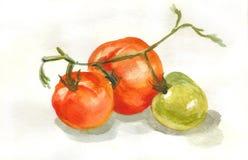 Картина акварели красных и зеленых томатов бесплатная иллюстрация