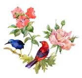 Картина акварели нарисованная рукой безшовная с красивыми цветками и красочными птицами на белой предпосылке Стоковая Фотография