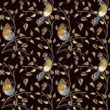 Картина акварели при робин сидя на ветви дерева Иллюстрация осени при птицы и листья падения изолированные на черноте Стоковое Изображение