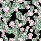 Картина акварели с кактусом Стоковая Фотография