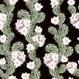 Картина акварели с кактусом Стоковые Изображения