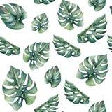 Картина акварели тропическая безшовная с листьями monstera Стоковые Фото