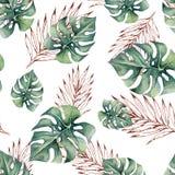 Картина акварели тропическая безшовная с листьями monstera Стоковое фото RF