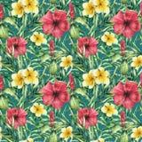 Картина акварели тропическая яркая с plumeria и hibiskus Вручите покрашенные цветки с листьями ладони на темноте иллюстрация вектора