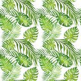 Картина акварели флористическая тропическая безшовная с зелеными листьями monstera и листьями пальмы на белизне бесплатная иллюстрация