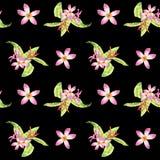 Картина акварели флористическая тропическая безшовная с зелеными листьями monstera и розовыми цветками plumeria на черноте иллюстрация вектора