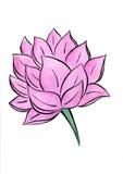 Картина акварели цветка лотоса нарисованная вручную Стоковое Фото