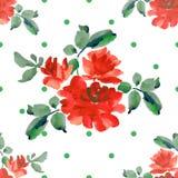 Картина акварели безшовная с букетами красных роз и зеленой польки на белой предпосылке Стоковое Фото
