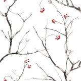 Картина акварели безшовная с ветвями и ягодами Стоковое Фото