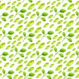 Картина акварели безшовная с зелеными лист Стоковая Фотография RF