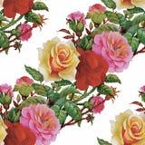 Картина акварели безшовная с розами Предпосылка для интернет-страниц, wedding приглашений, сохраняет карточки даты бесплатная иллюстрация