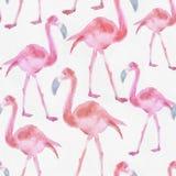 Картина акварели безшовная с фламинго Стоковые Изображения RF