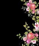 Картина акварели выходит и цветок, на темную предпосылку Стоковые Изображения