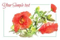 Картина акварели знамени с букетом красных маков Стоковые Изображения