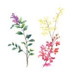 Картина акварели листьев и цветка, на белой иллюстрации предпосылки Стоковые Фото