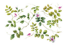 Картина акварели листьев и цветка Стоковое фото RF
