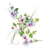 Картина акварели листьев и цветка Стоковое Изображение RF